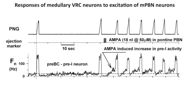 Responses of medullary VRC neurons to excitation of mPBN neurons