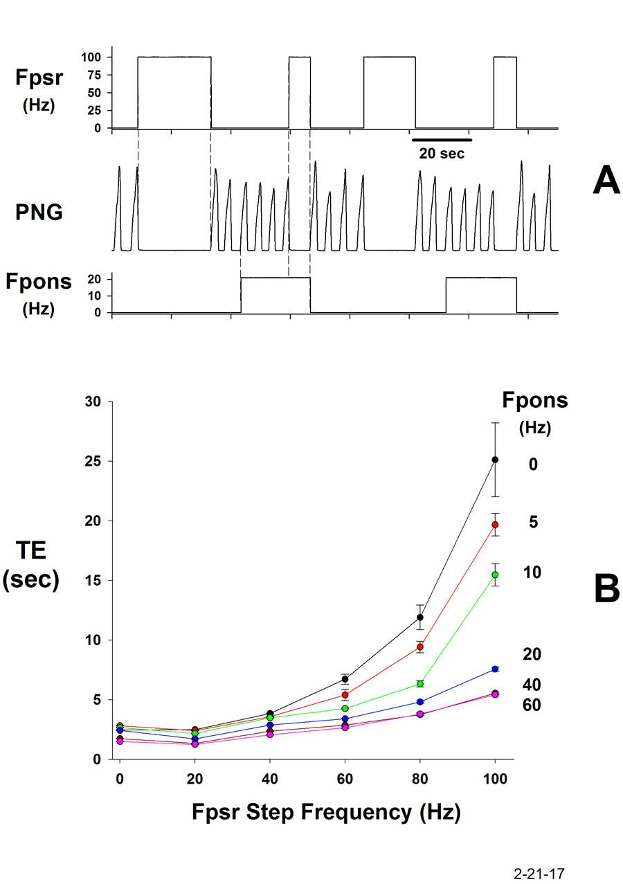 Electrically-induced PSR activity during the E-phase (Fpsr), prolongs TE. When the pontine subregion is electrically stimulated (Fpons), the PSR effect on TE is greatly reduced. Plots of TE as a function of PSR frequency for the various pontine frequencies indicated. The strength of the H-B E-prolonging effect is proportionately reduced at each pontine stimulus frequency, thus controlling the gain of the reflex.