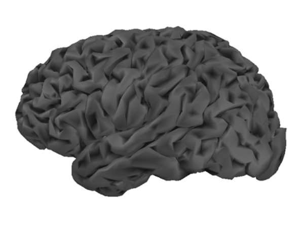 cortical surface, tessellated using 10,034 vertices (smooth)