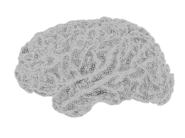 cortical surface, tessellated at 79,124 vertices