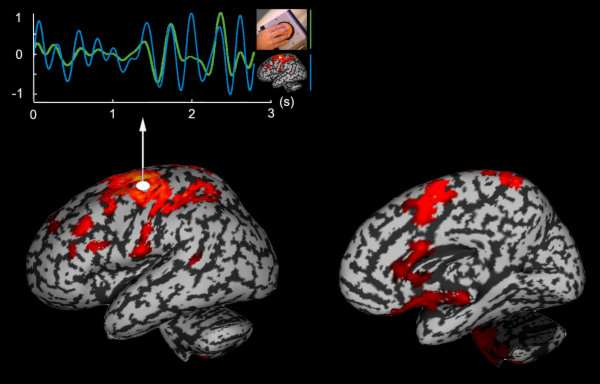 cortical functional network involved in hand movement coordination at low frequency (4Hz)